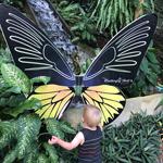 Сад бабочек Саитхип