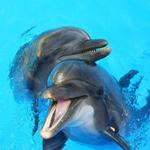 Дельфинарий Dolphin World