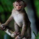 Гора обезьян