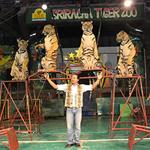 Тигровый зоопарк Сирача