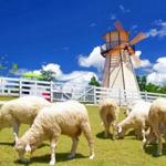 Швейцарская овечья ферма