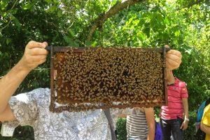 Пчелиная ферма в Паттайе