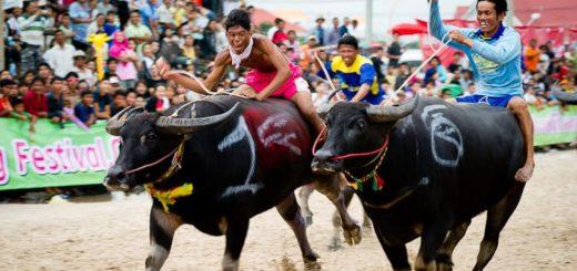 Buffalo Racing Festival 2019