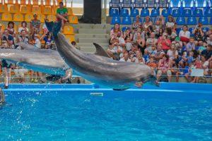 Дельфинарий Dolphinarium