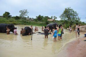 Слоновья ферма в Паттайе