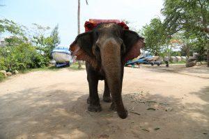 Катание на слонах около Храма Итсины
