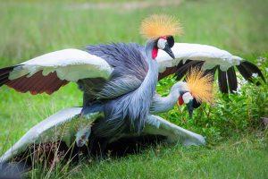 Птицы в зоопарке Кхао Кхео
