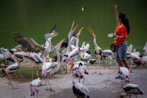 Парад птиц