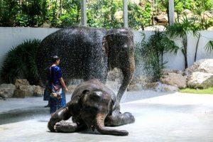 Шоу слонов в зоопарке Кхао Кхео