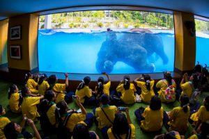 Подводное шоу слонов