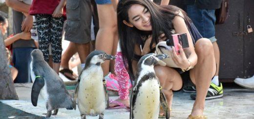 Селфи с пингвинами