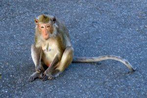 Гора обезьян Khao Sam Muk