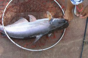 Рыбалка на Джомтьене