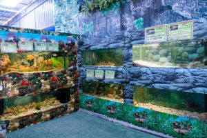 Океанариум Monsters Aquarium