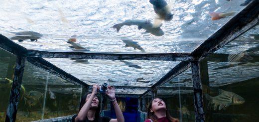 Океанариум Monsters Aquarium