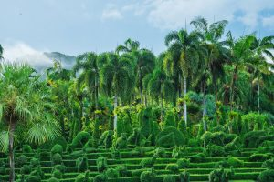 Голубой сад пальм