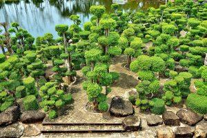 Парк топиарий деревьев и кустарников