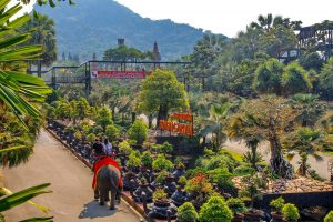 Катание на слонах в парке карликовых деревьев бонсай
