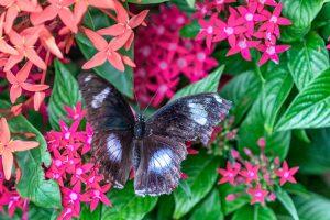 Сад бабочек Saithip