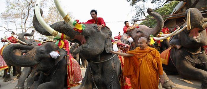 День слона в Паттайе