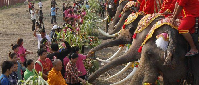 13 марта - День слона