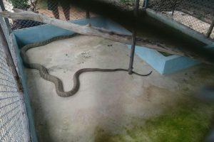 Вольеры со змеями