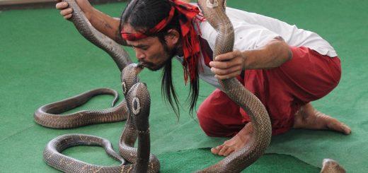 Шоу со змеями в Паттайе