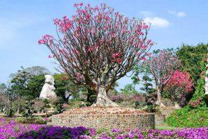Сад миллионолетних камней в Паттайе
