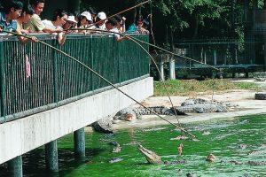 Рыбалка на крокодилов