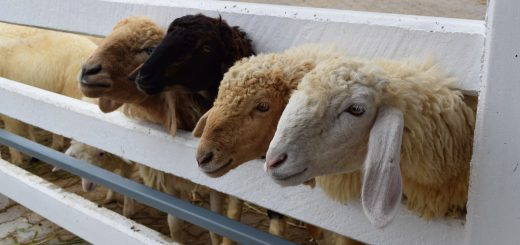 Швейцарская ферма в Паттайе