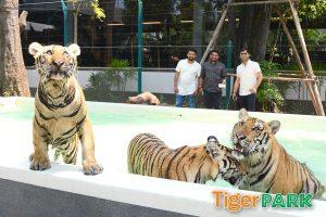 Тигровый парк в Паттайе