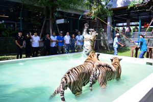 Тигровая ферма в Паттайе