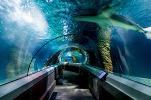 Подводный туннель океанариума