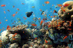 Коралловые рифы и экзотические рыбки