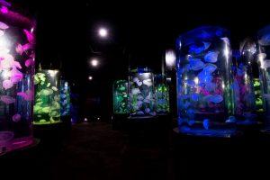 Аквариумы с медузами